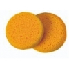 Hydra Sponge  -  Medium